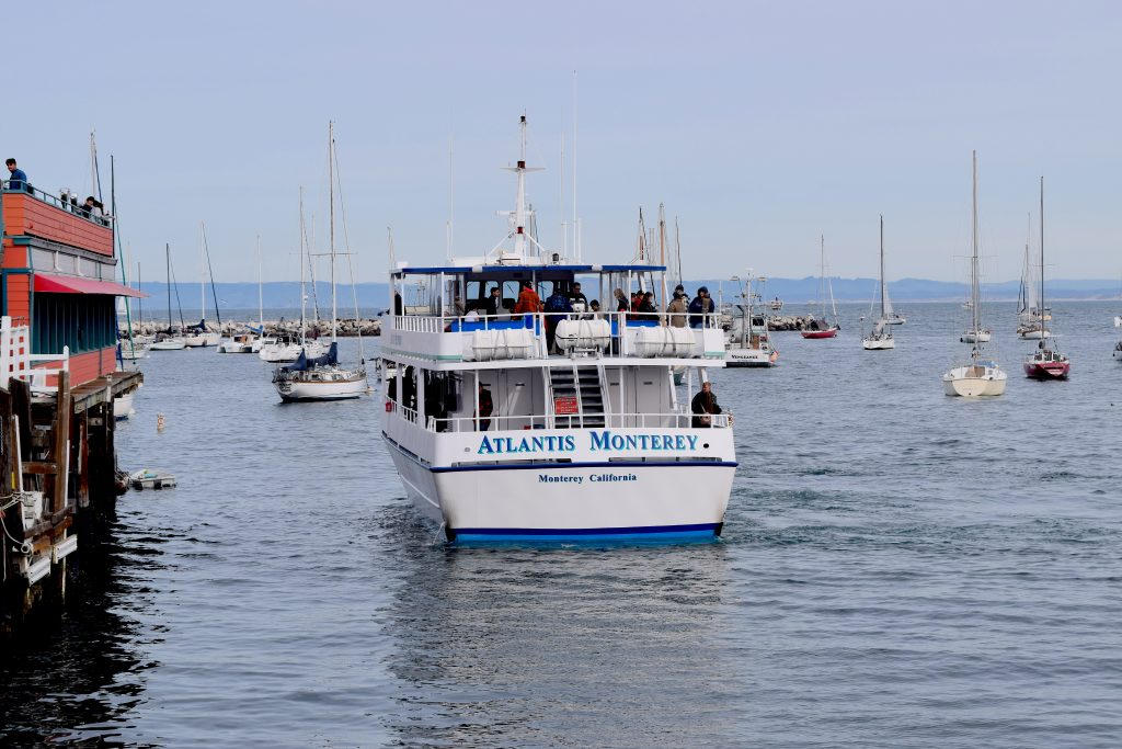 Whale watching tour boat
